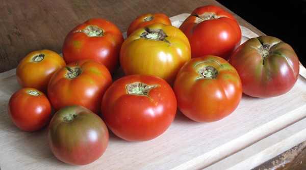tomato harvest early July 2012